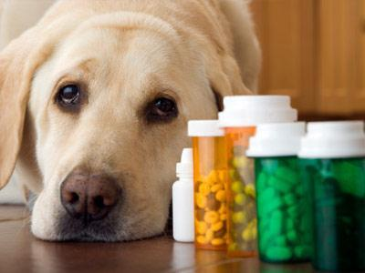 pet sedation policy