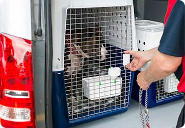 9bf996f83e Your pet will be collected from your residence by one of our friendly  drivers in the Pet Carriers van. Our drivers are experienced ...